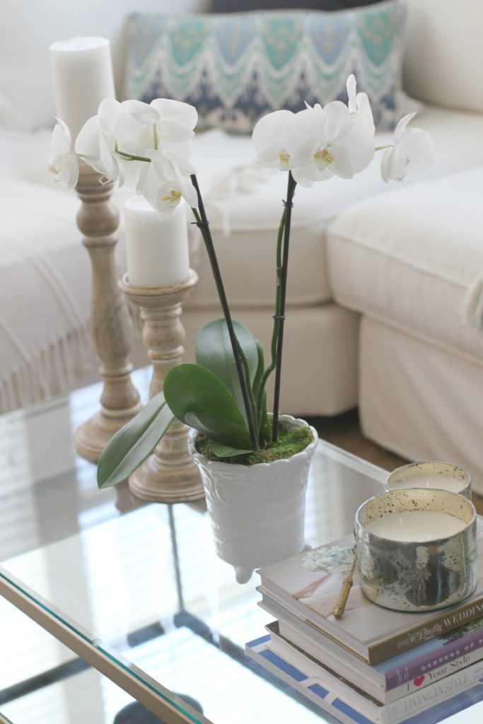 How to Pot and Orchid 6