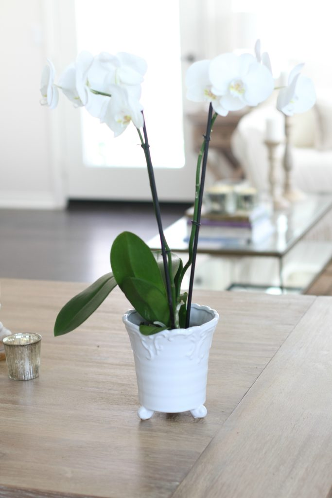 How to pot an orchid